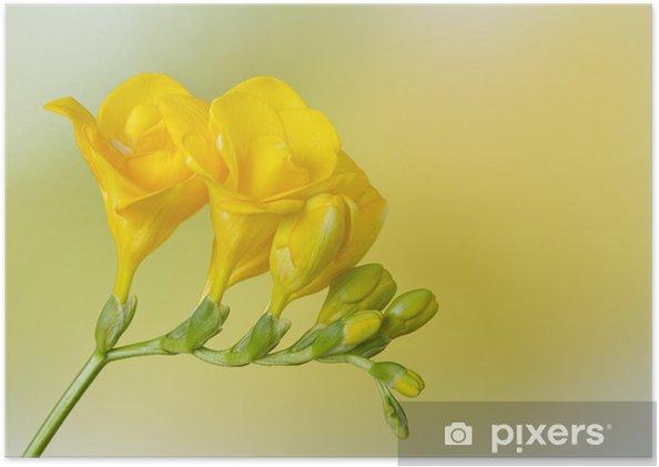 Plakat Żółty frezja na tle żółty i zielony - Kwiaty