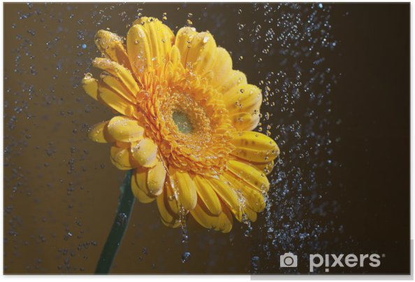Plakat Żółty Gerbera - Kwiaty
