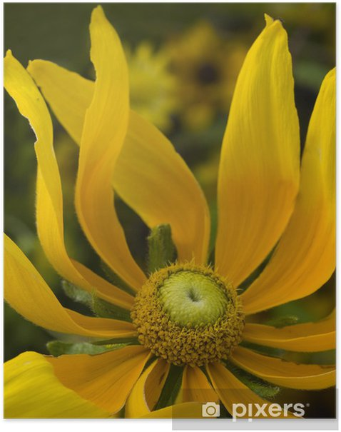 Plakat Żółty kwiat - Kwiaty