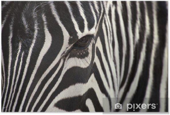 Plakat Zwierzęta - Tematy