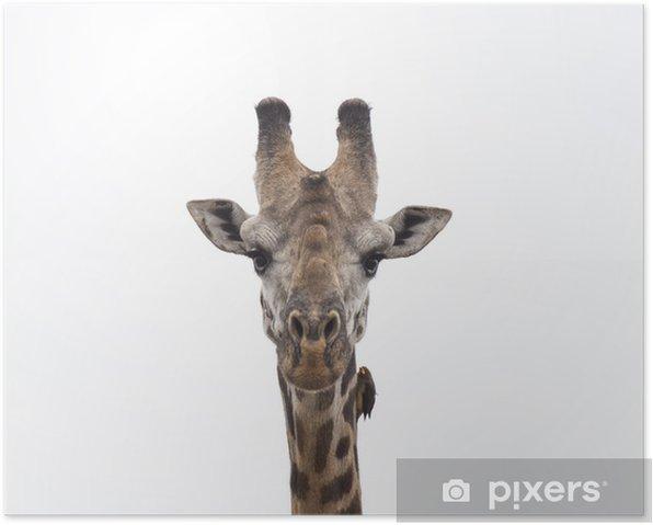 Plakat Żyrafa i ptak - Afryka