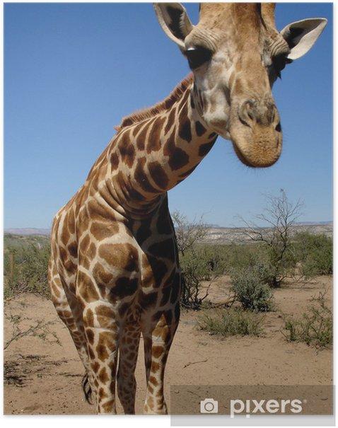 Plakat Żyrafa w Pustyni - Tematy