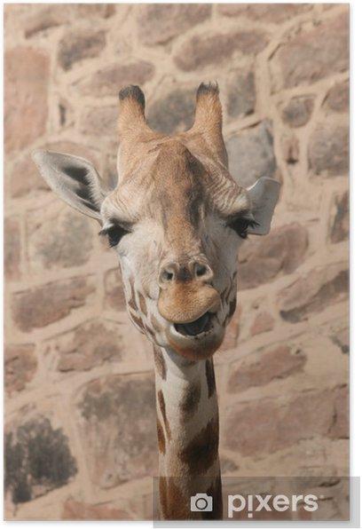 Plakat Żyrafa - Tematy