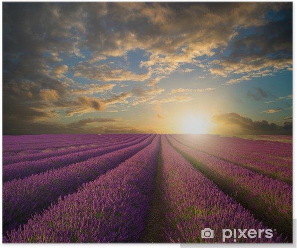 Plakat Żywy letni zachód słońca nad krajobrazu pola lawendy - Tematy