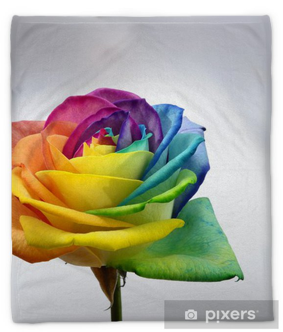 Close Up Of Rainbow Rose Flower Plush Blanket Pixers We Live To Change