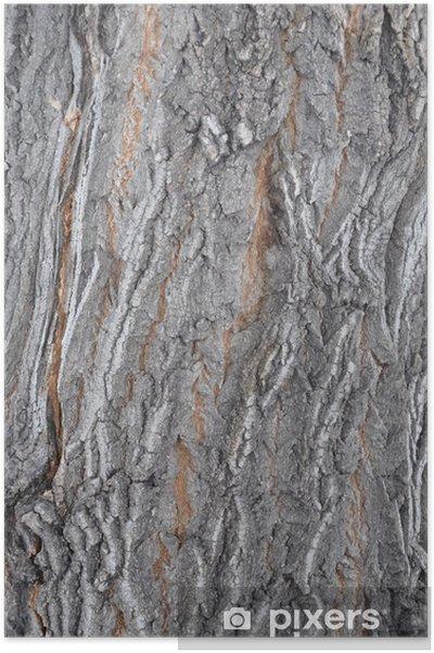 Poster Кора клена - Texturen