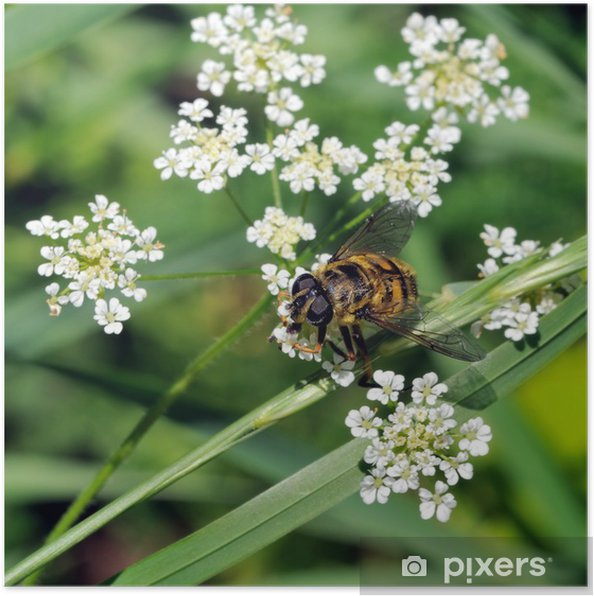 Poster Abeille - Andere Andere