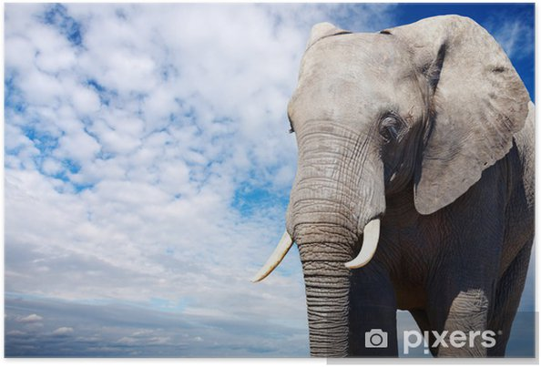 Poster African elephant - Himmel