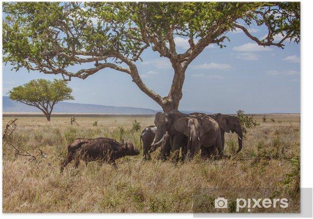 Poster Afrikanische Landschaft Elefanten gegen Büffel geschützt - Themen