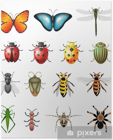 poster aktualisierte version von vektorinsekten  bugs