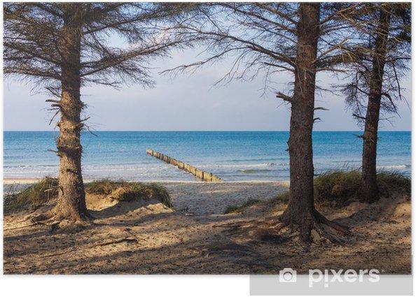 Poster Alberi sulla costa del Mar Baltico - Acqua