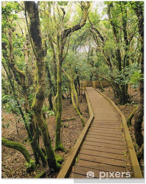 Poster Anaga-Gebirge und Wald, Teneriffa, Kanarische Inseln, Spanien - Urlaub