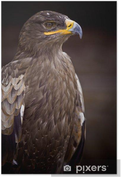Poster Aquila di sguardo becco piuma preda busto fiero testa re - Temi