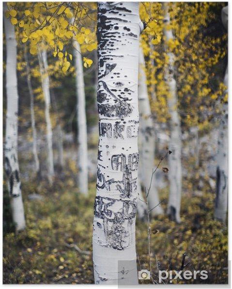 Poster Aspen-Baum mit Schnitzereien - Wälder