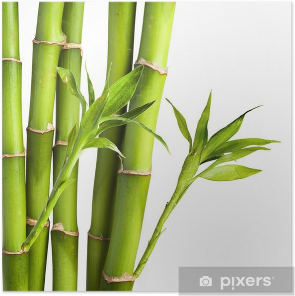 Foglia Di Bamb.Poster Bambu E Foglie Di Bambu Su Sfondo Bianco