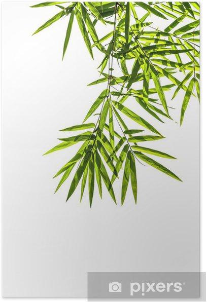 Poster Bambus-Blätter auf weißem Hintergrund, Clipping-Pfad includ - Haus und Garten