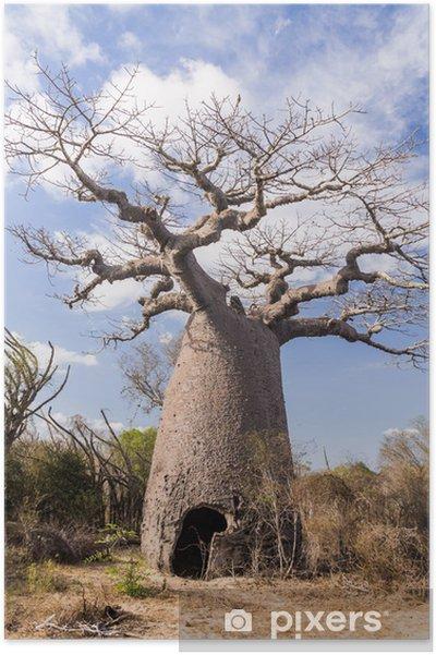 Poster Baobab Albero E Savana Pixers 174 Viviamo Per Il