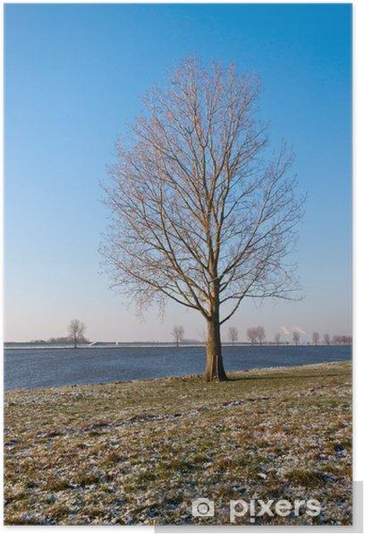 Poster Bare einsamer Baum auf einem Flussufer in den Niederlanden - Traurigkeit