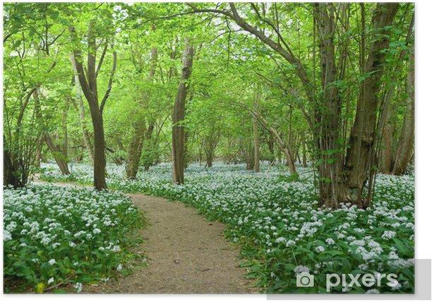 Poster Bärlauch wachsen in Woodland - Pflanzen