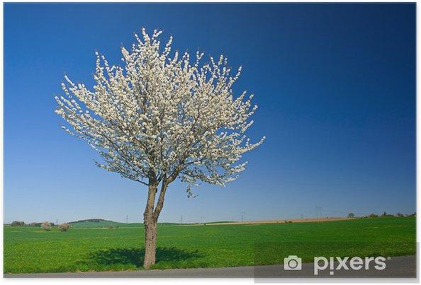 Poster Baum - Jahreszeiten