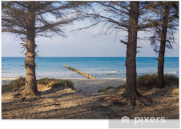 Poster Bäume an der Ostseeküste. - Wasser