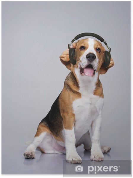 Poster Beagle Hund Das Tragen Von Kopfhörern