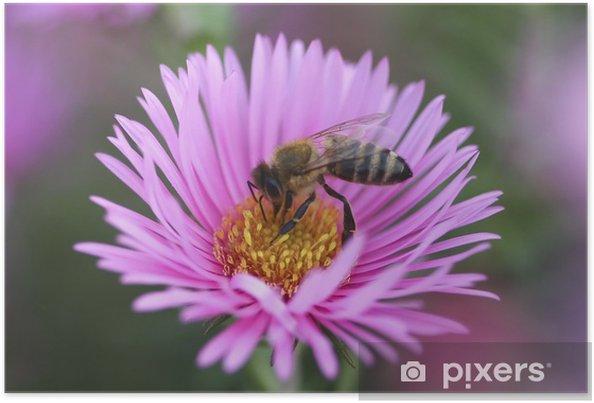 Poster Bee sammeln Pollen aus der Asterblume - Andere Andere