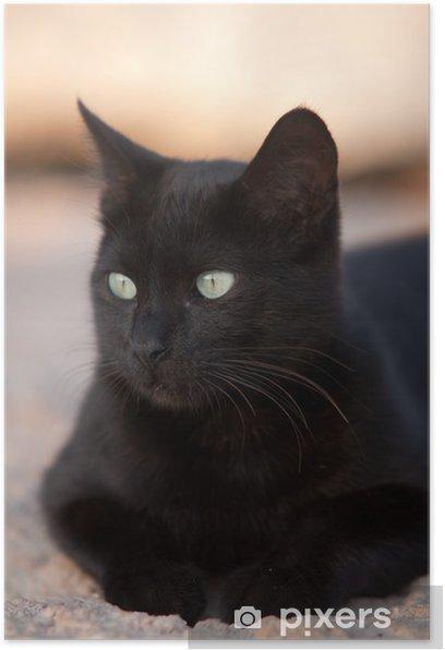 Poster Black Cat - Themen
