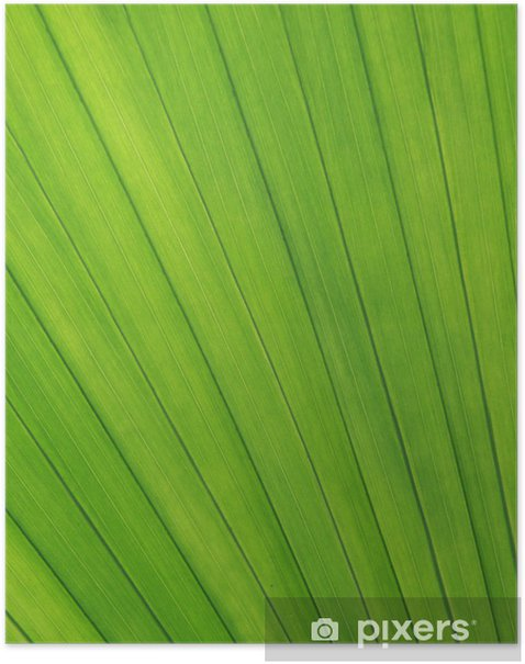 Poster Blattstruktur - Pflanzen