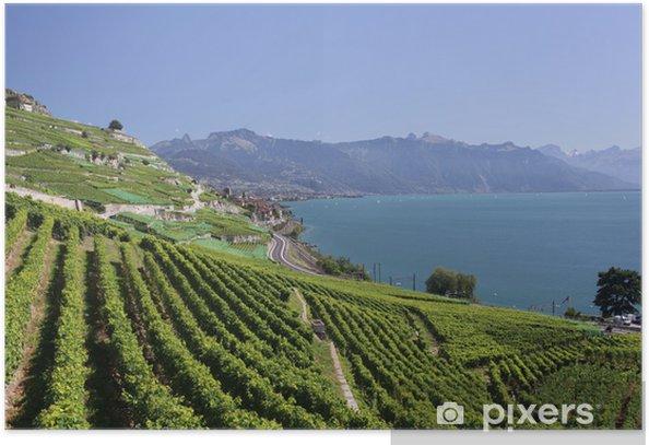Poster Blick über den Genfer See von den Lavaux Weinreben. - Europa