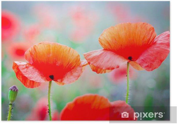 Poster Blossom Mohn Blumen auf der Wiese - Blumen