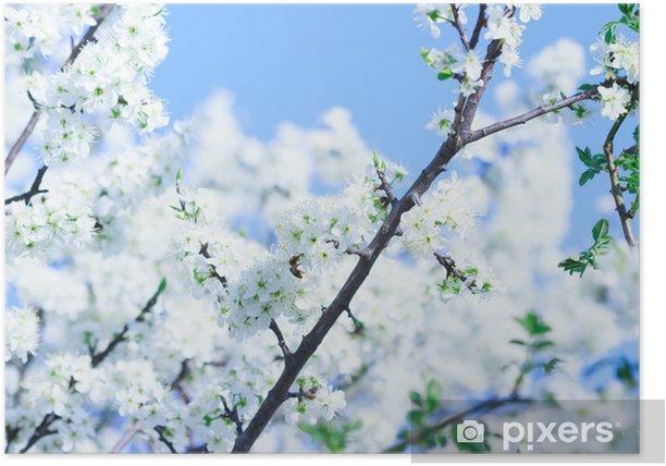 Poster Blühender Baum mit weißen Blüten im Frühjahr - Blumen
