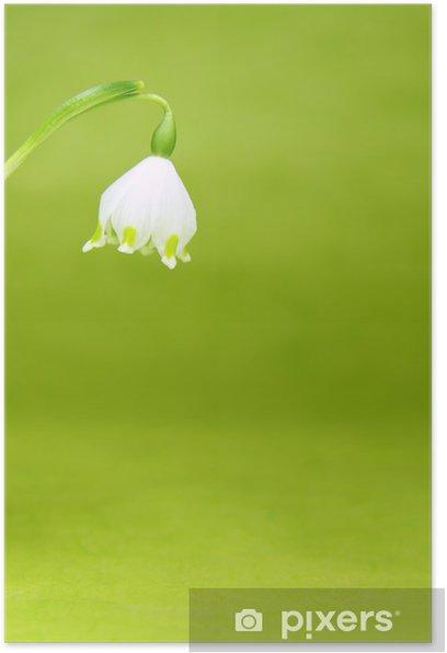 Poster Blühender Märzbecher - Jahreszeiten