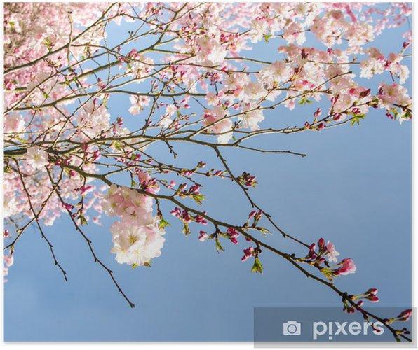 japanische kirschblüten