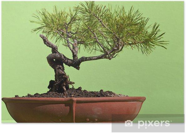 Poster Bonsai - Bäume