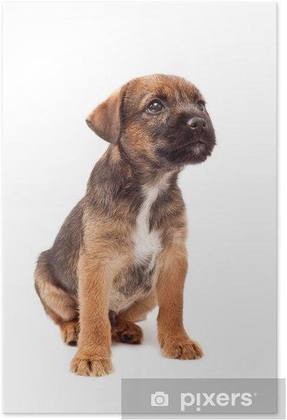 Poster Border Terrier Welpen Sucht Pixers Wir Leben Um Zu Verandern
