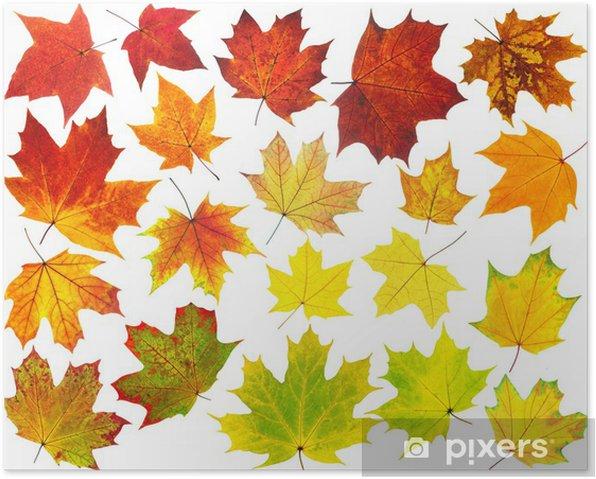Poster Bunte Ahornblätter - Jahreszeiten