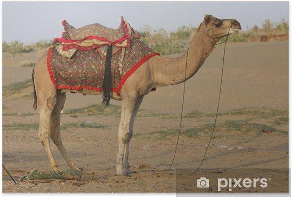 Poster Cammello Dromedario Nel Deserto In Rajasthan India Pixers