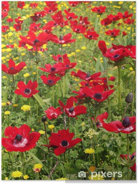 Poster Campo di primavera di papaveri rossi - Temi