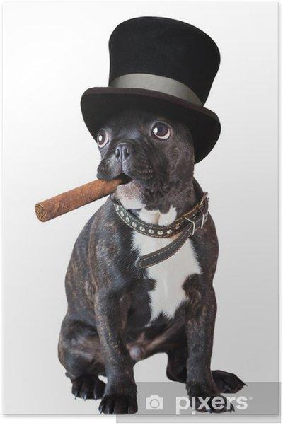 Poster cane bulldog francese seduto con un sigaro u2022 pixers