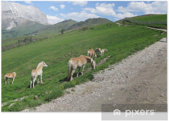 Poster Cavalli sulle Alpi delle Dolomiti - Europa