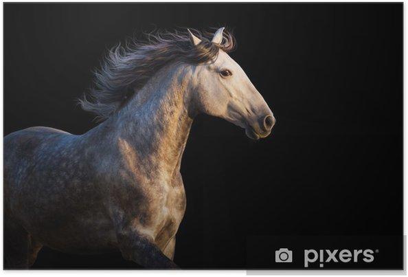 Poster Cavallo Bianco Con La Criniera Lunga Correre Al Tramonto Di