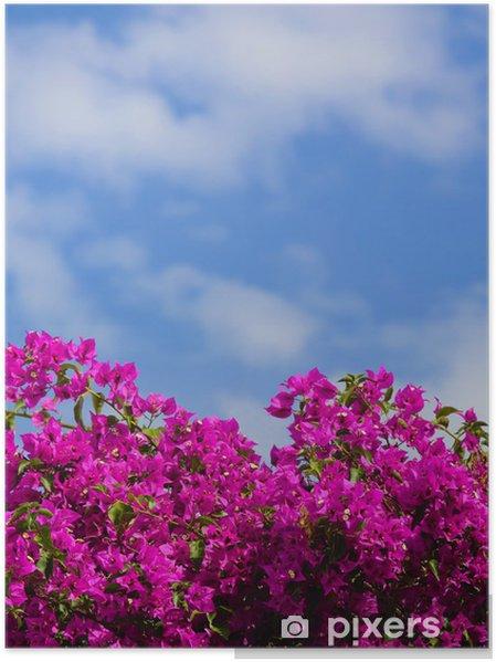 Poster Cespuglio di fiori rosa a Santorini, in Grecia. - Fiori