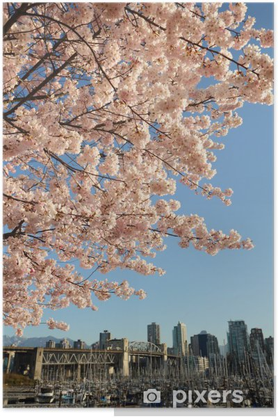 Poster Cherry Blossoms oltre Vancouver - America