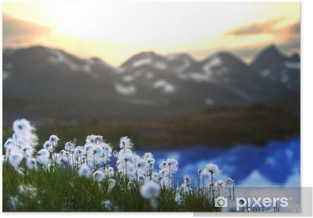 Poster Cotton Flowers - Natur und Wildnis