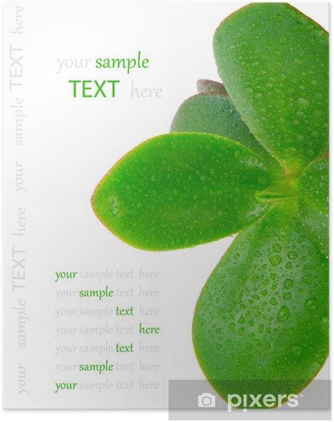 Poster Crassula ovata - Pflanzen
