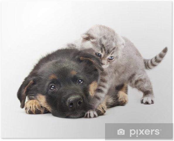Poster Cucciolo Di Cane Pastore Tedesco E Un Gatto Su Sfondo Bianco