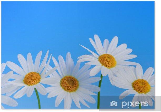 Poster Daisy Blumen in einer Reihe auf hellblauem Hintergrund - Blumen
