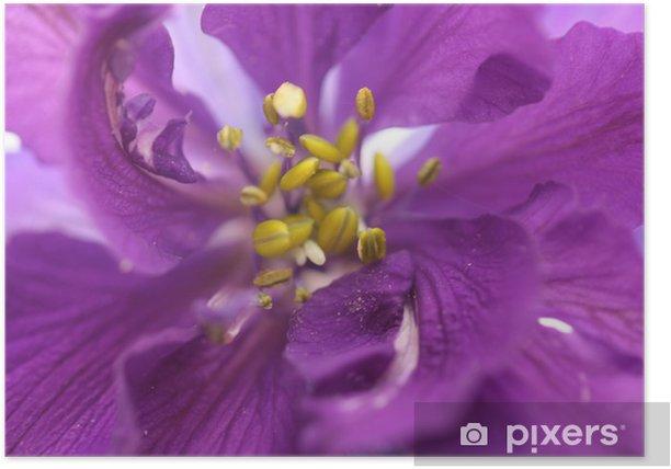 Poster Delphinium larkspur close up - Blumen