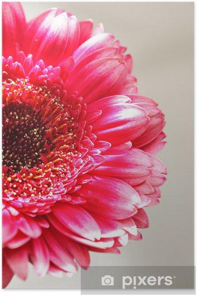 Poster Die rosa gerber close up - Jahreszeiten
